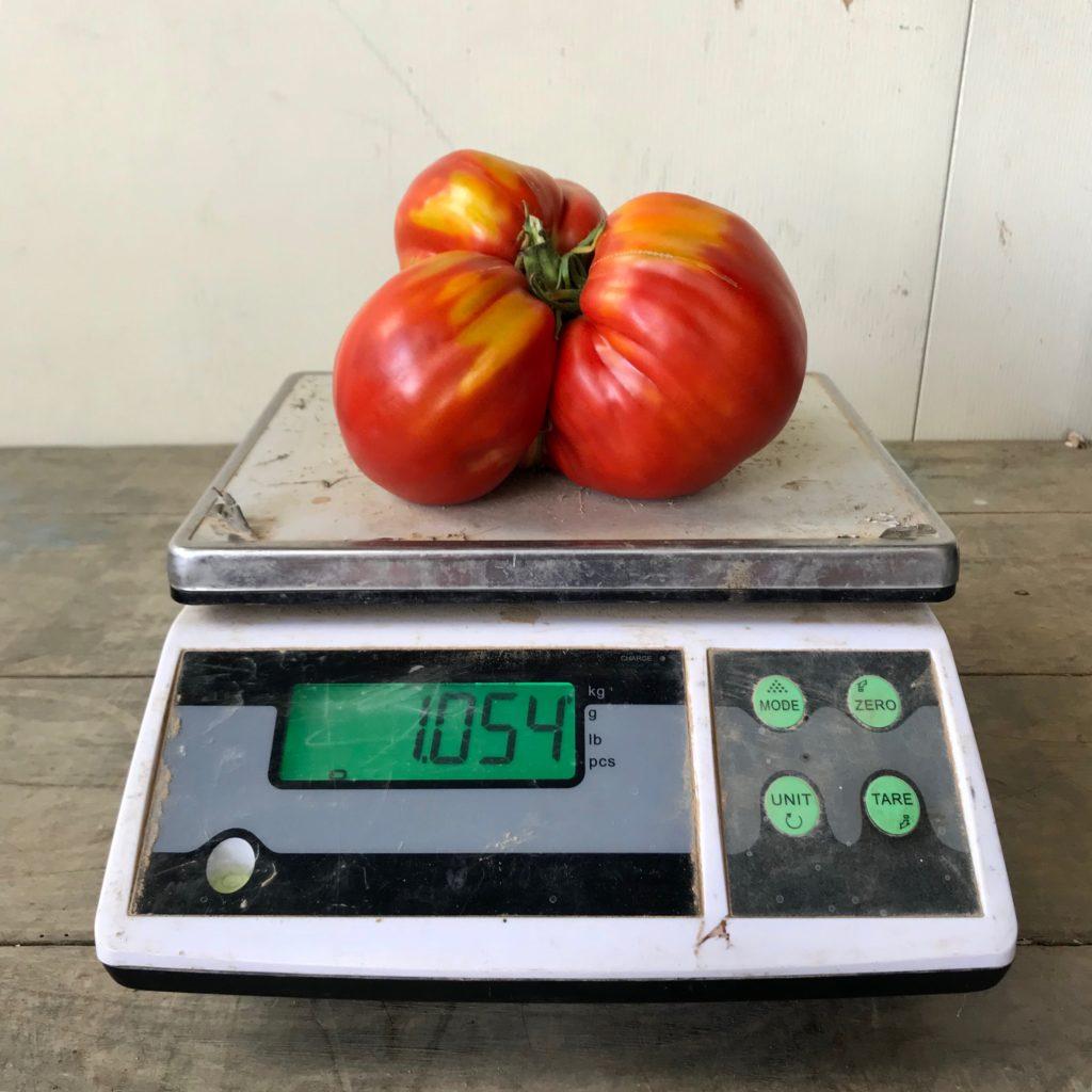 le champ gallo tomates coeur de boeuf